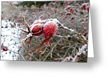 Hoarfrost 3 Greeting Card