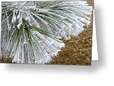 Hoarfrost 4 Greeting Card