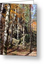 Hocking Hills Trees Greeting Card
