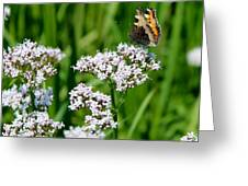 Hogweed Greeting Card