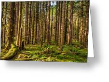 Hoh Rain Forest Greeting Card