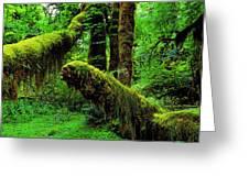 Hoh Rainforest Greeting Card