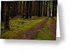 Hoh Rainforest Road Greeting Card