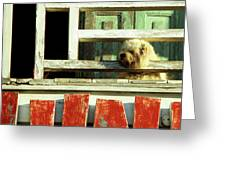 Hoi An Dog 02 Greeting Card