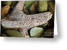Holey Driftwood Greeting Card