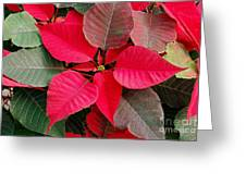 Holiday  Color Greeting Card