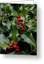 Holiday Holly Greeting Card
