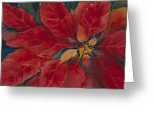 Holiday Poinsettia Greeting Card