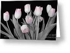Holland Tulips In Black And White With Pink Greeting Card