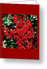 Holly Berries # 2 Greeting Card
