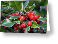 Holly Berries 2 Greeting Card