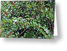 Holly Bush - Greeting Card