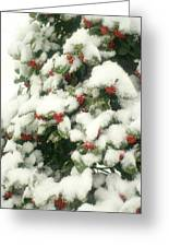 Holly Tree With Snow Greeting Card