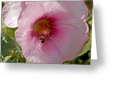 Hollyhock And Bee Greeting Card