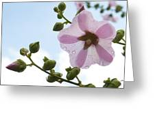 Hollyhock With Raindrops Greeting Card