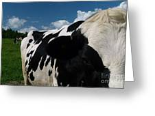 Holstein Cow And Pasture Greeting Card
