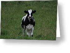 Holstein Hello Greeting Card