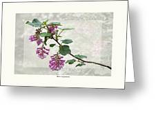 Ribes Sanguineum - California Currant Greeting Card