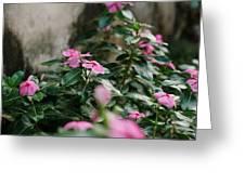 Home Flower Greeting Card