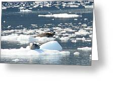 Home Home On The Ice Greeting Card