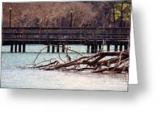 Home Of The Black-crowned Night Heron Greeting Card