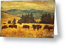 Home On The Range Greeting Card by Lianne Schneider