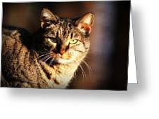 Homeless Cat Greeting Card