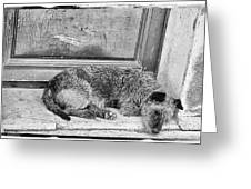 Homeless Dog Greeting Card
