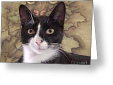 Homeless Kitty To Super Model Greeting Card by Robert Stagemyer