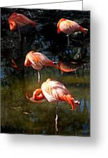 Homosassa Springs Flamingos 5 Greeting Card