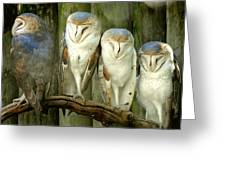 Homosassa Springs Snowy Owls 2 Greeting Card