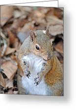 Homosassa Springs Squirrel 2 Greeting Card