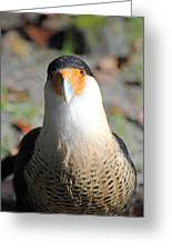 Homosassa Springs Waterfowl 21 Greeting Card