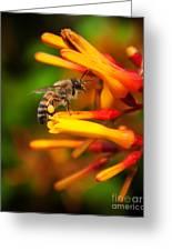 Honey Bee 4 Greeting Card