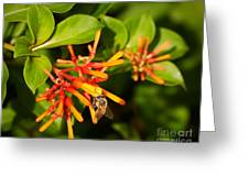 Honey Bee 6 Greeting Card