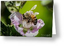 Honey Bee And Blackberry Greeting Card