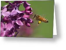 Honey Bee And Lilac Greeting Card