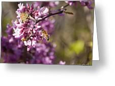 Honey Bee And Redbud Greeting Card