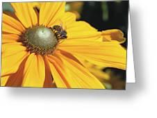 Honey Bee And Yellow Dahlia Flower Greeting Card