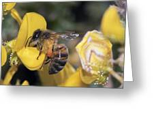 Honey Bee Feeding Greeting Card