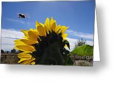 Honey Bee In Flight. Greeting Card