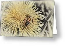Honey Bee Meets Dandy Lion Greeting Card