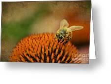Honey Bee On Flower Greeting Card by Dan Friend