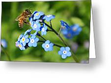 Honey Bee On Forget-me-not Flowers Greeting Card