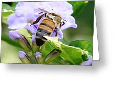 Honey Bee On Lavender Flower Greeting Card
