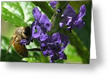 Honey Bee On Purple Flower Greeting Card