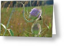 Honey Bee Picks Up Pollen Greeting Card