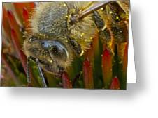 Honey Bee Profile Greeting Card