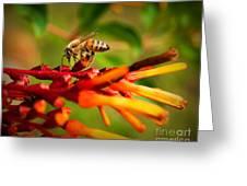 Honey Bee Profile Greeting Card