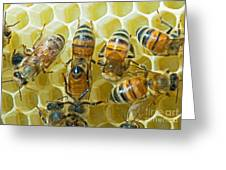 Honey Bees In Hive Greeting Card
